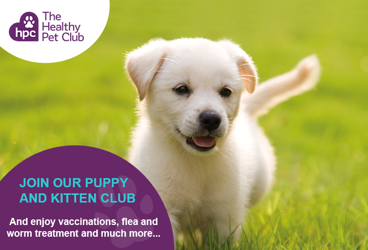 Healthy Pet Club puppies