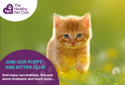 Join the Healthy Pet Club kittens today