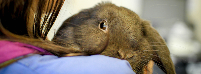 Rabbit with vet